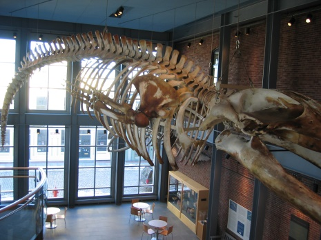 WHALING MUSEUM 2